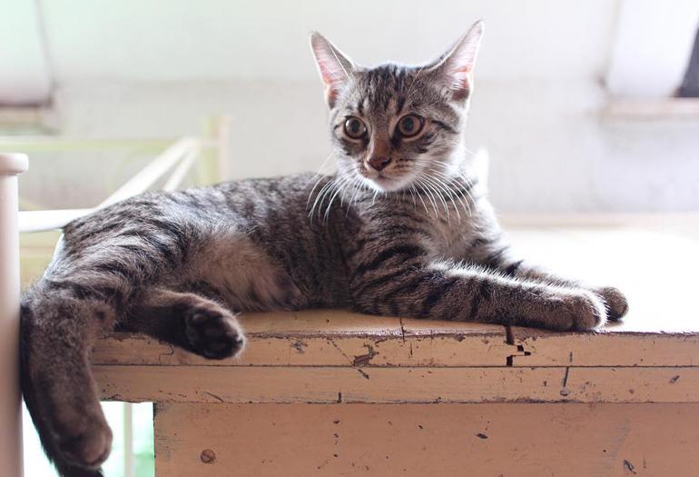 тапетум в глазах у кошки