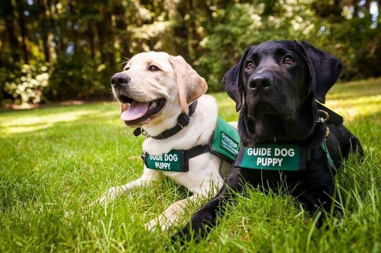 центр подготовки собак-поводырей