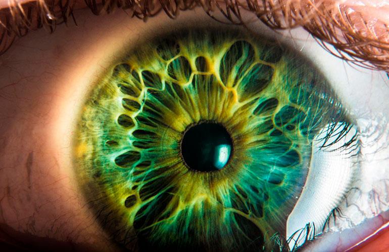 роговая оболочка глаза