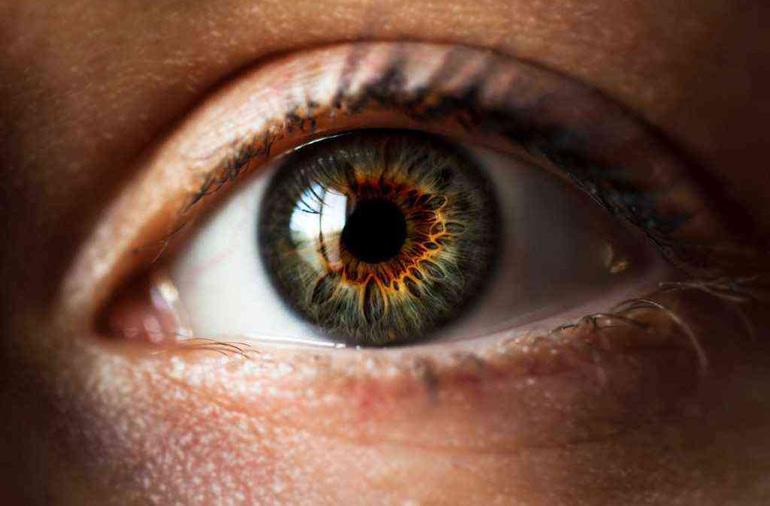 сетчатая оболочка глаза